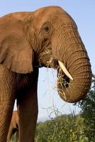 Deník sloní rodiny